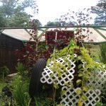 Lono Hale Giant Lilikoi