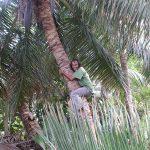 Mojo Coconut Climbing