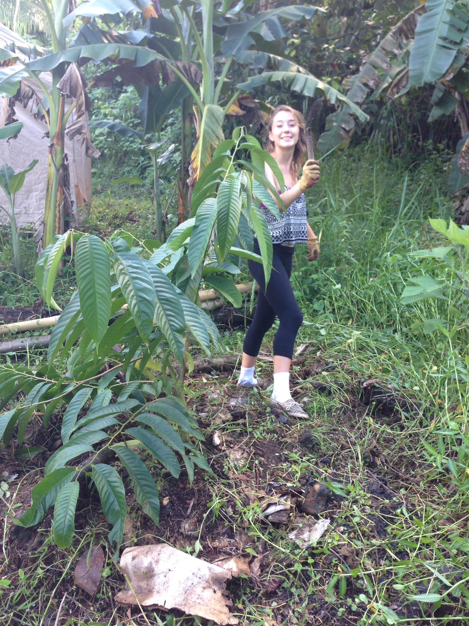 Green Hawaii Jungle Tips Living In The Hawaiian Rain Forest