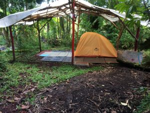Rainforest Camping Private Tent