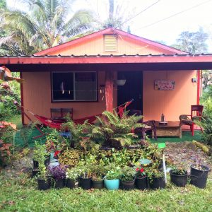 Jungle Cottage Pond Facade Hawaii