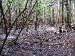 Small clearing on Black Sands Property
