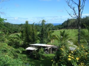 jungle lodgings in hawaii farm farming