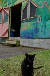 Midnight-the-cat