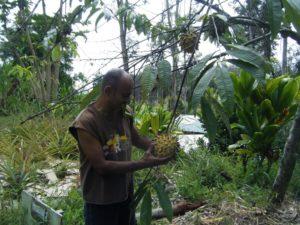 rollinia hawaii fruits of hawaii