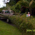 Hawaiian bamboo on our truck