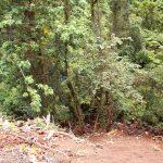 Jungle Community Crater Trail